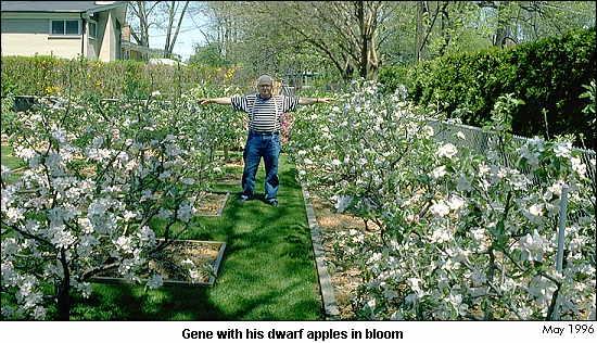 Minidwarf Orchard